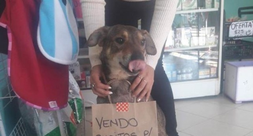 Perrito con cáncer vende busitos